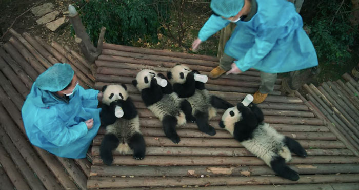 Pandasdoc.jpg
