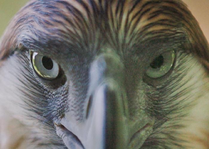 cagebirdcrop.jpg