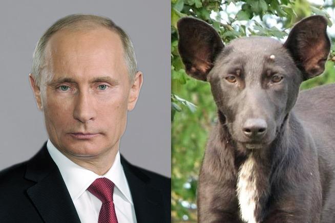 19-putin-dog.w710.h473.jpg