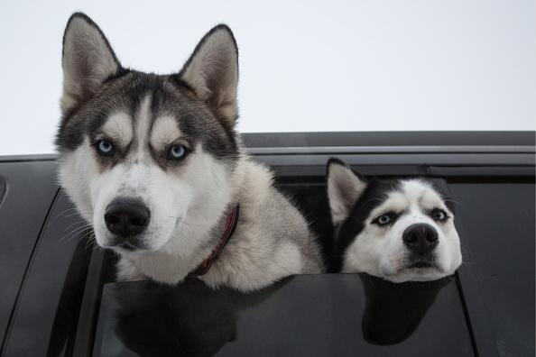dogsautismheader.jpg