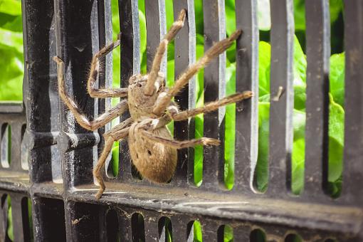 australian-spider-death-threat-header.jpg