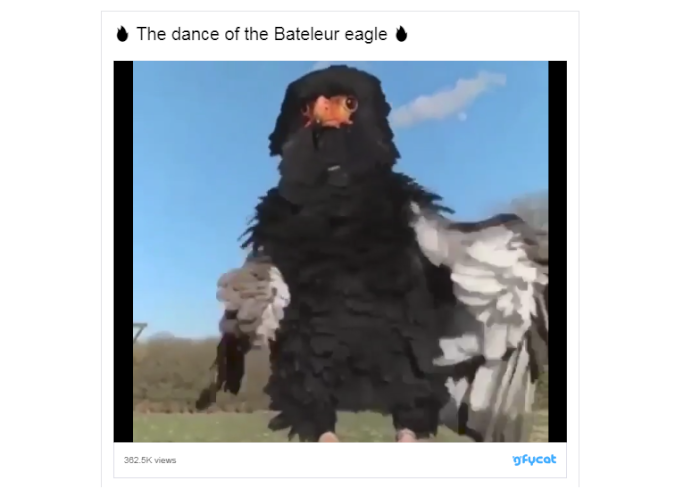 man-eagle-suit-header.png