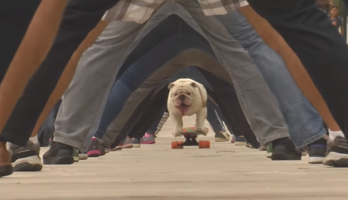 otto-skateboarding-dog-header.png