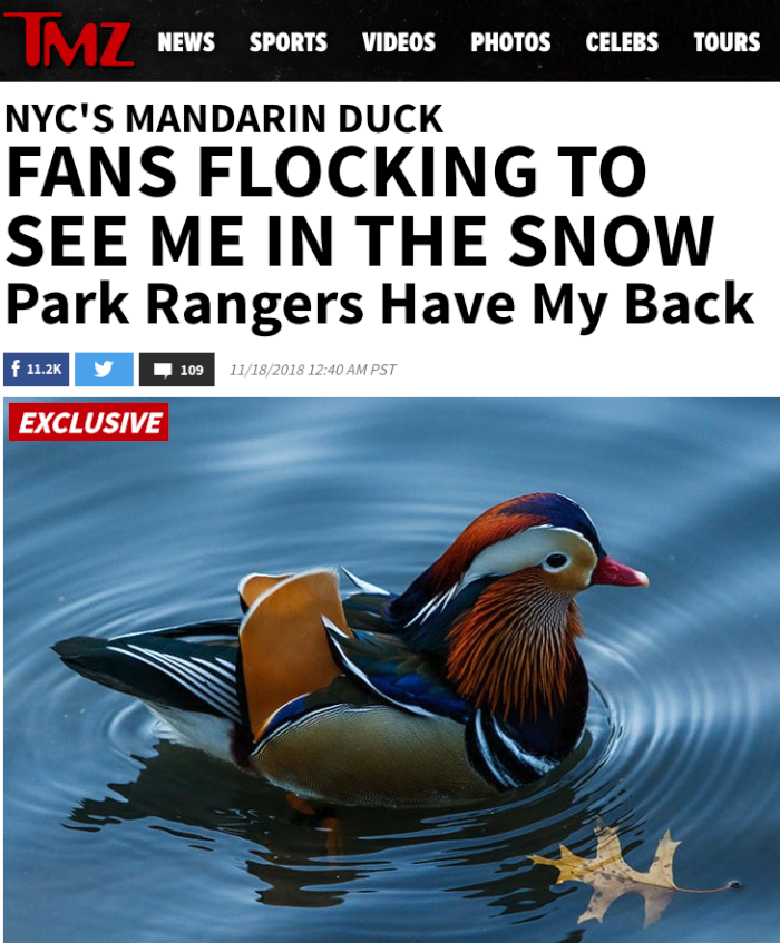 TMZ hot duck (1).png