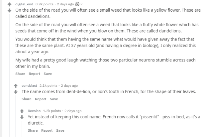 reddit-two-and-two-dandelions.png