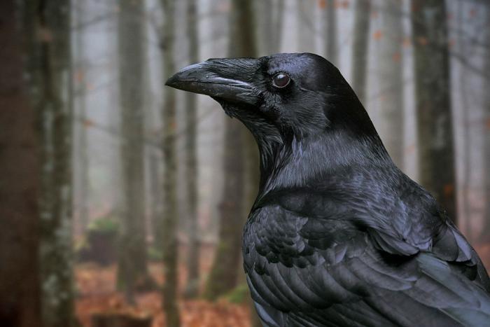 twitter-arguing-raven-rabit-header.jpg