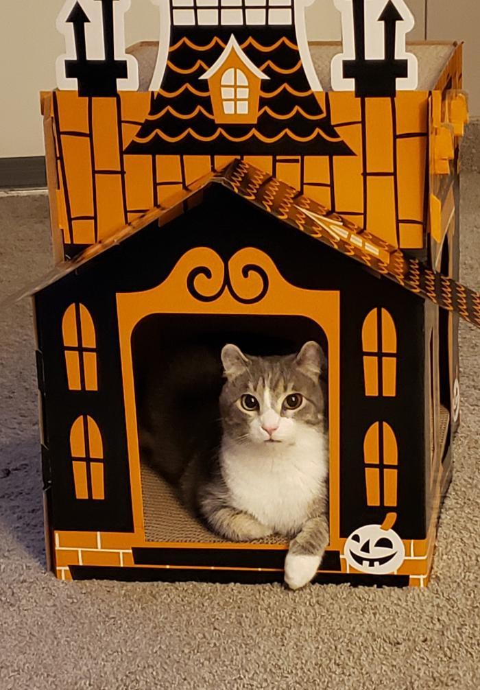 Pixiehauntedhouse.jpg