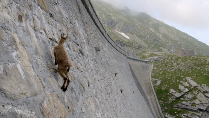 ibex-climbing-header.png