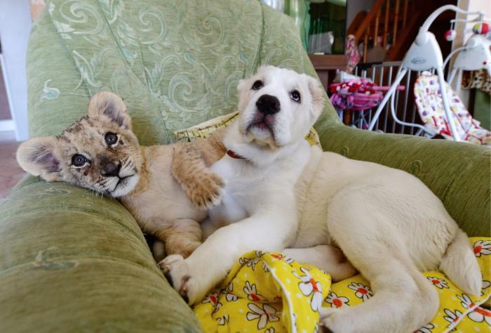 kitten-falling-asleep-on-dog-header.jpg