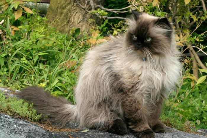 cat-jumps-over-fence-header.jpg