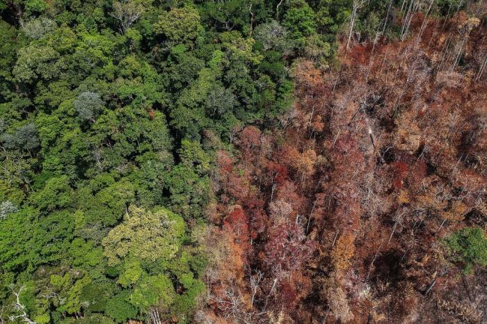 rainforest-carbon-source-header.jpg