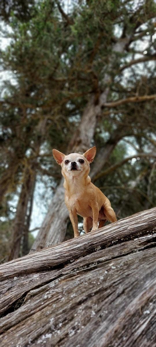 chihuaha-hike-1.jpg