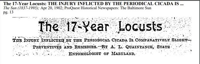 Cicadas, Baltimore Sun, 1902.jpg