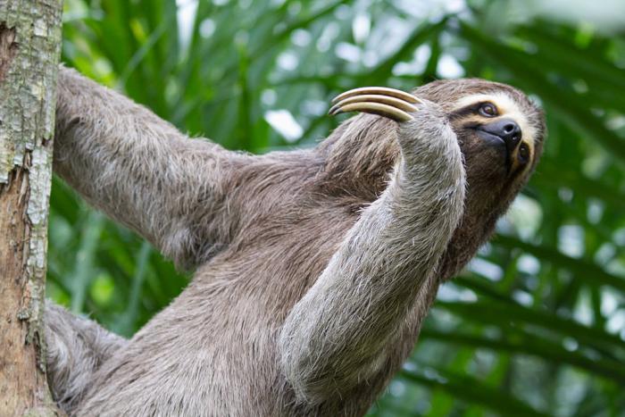 sloth-anaconda-header.jpg