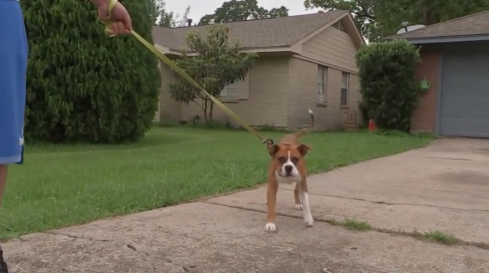 Texas Dog.PNG