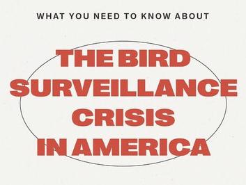 Bird Surveillance Crisis.png