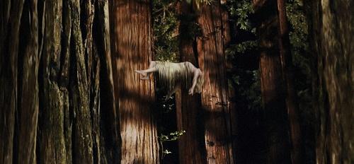 Pajiba - Woodshock - 2.jpg